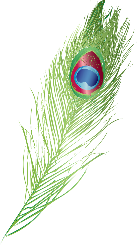graphic, peacock feather, peacock