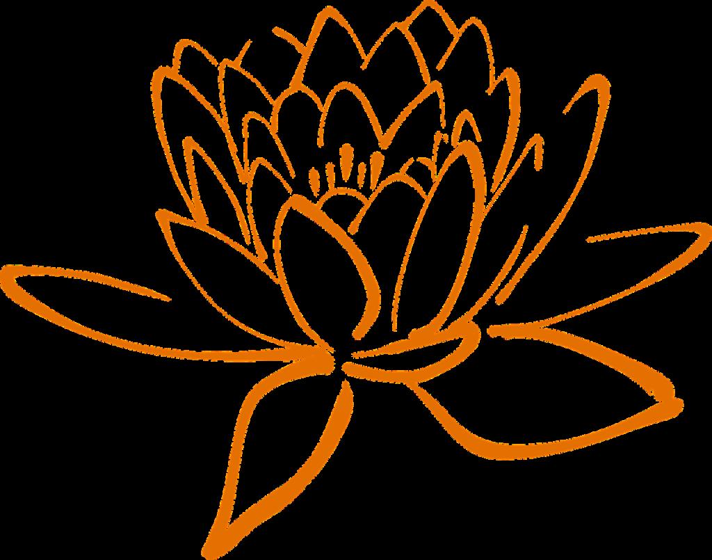 lotus, blossom, flower